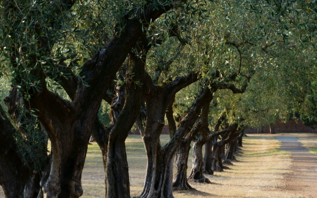 Is Your Olive Oil Organic?